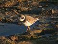 Picture Title - Bird in Ria Formosa