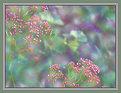Picture Title - Springtime Fantasy