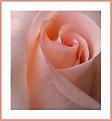 Picture Title - Peach Floral
