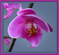 Picture Title - Orchid no. 10