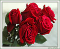 Picture Title - Roses for all my friends