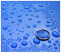 Picture Title - In the Rain