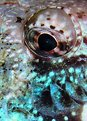 Picture Title - Parrotfish