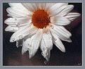 Picture Title - Underwatered Panting Flower