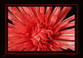 Picture Title - Red