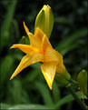 Picture Title - Lily? Need help with name(2)
