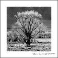Picture Title - Lone Tree