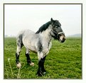 Picture Title - Brabant Horse