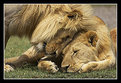Picture Title - Father/Son Love