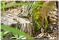 Picture Title - naturaleza muerta
