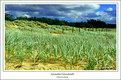 Picture Title - Australia Grassland