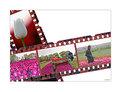 Picture Title - Tulip farmer series