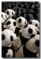 Picture Title - Pandamonium