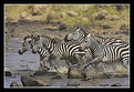 Picture Title - Zebra Crossing