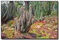 Picture Title - Desert Colors