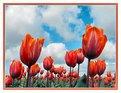 Picture Title - Tulip view