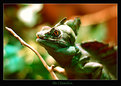 Picture Title - The Chameleon