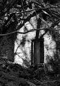Picture Title - Woodland ruin
