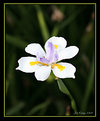 Picture Title - Simple Flower