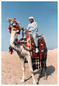 Camel - Cairo 1984