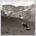 Solitary horse