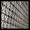 Picture Title - The net