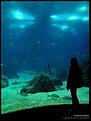 Picture Title - Oceanario