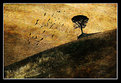 Picture Title - The crows of Volterra