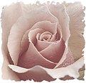 Picture Title - delicate heart
