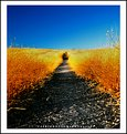 Picture Title - the way to destination