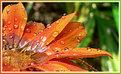 Picture Title - Fresh Drops