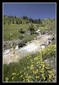 Picture Title - Mountain Stream with Wildflowers