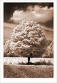 Picture Title - Tree Infrared