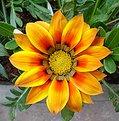 Picture Title - meu jardim