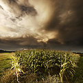 Picture Title - Cornfield - Mariazell