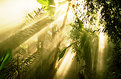 Picture Title - Rainforest