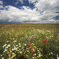 Picture Title - Summer Meadow (II)
