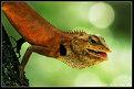 Picture Title - Gecko
