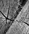 Picture Title - cross cut