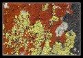 Picture Title - Tricolor Lichen