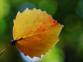 Picture Title - Yellow and Red Leaf