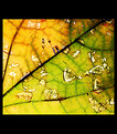 Picture Title - Leaf Abstract