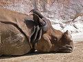 Picture Title - Dirt Nap