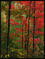 Picture Title - Fall Red