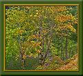 Picture Title - Fall Splender