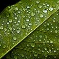 Dew Drops 2