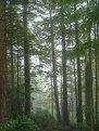 Picture Title - Redwood Mist
