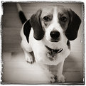Picture Title - Beagle Story