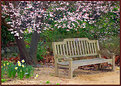 Picture Title - Park Bench