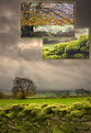 Picture Title - Peak District Triptych
